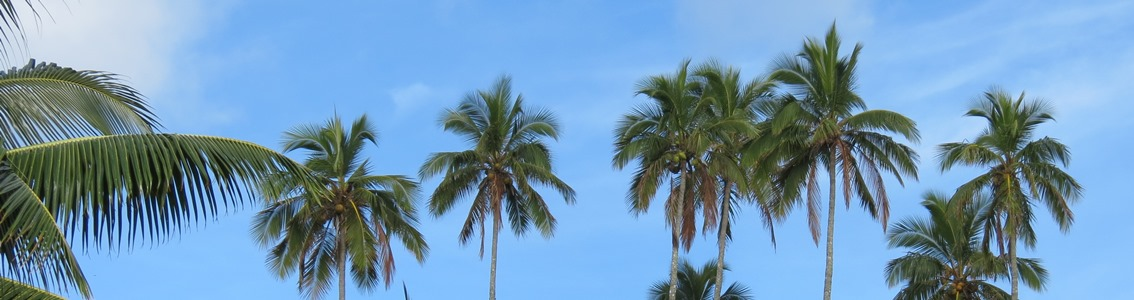 Palm trees against blue ky